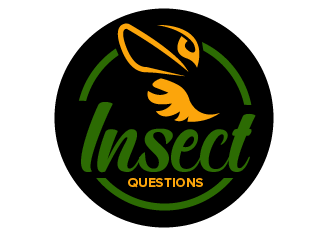 Insect Questions logo design